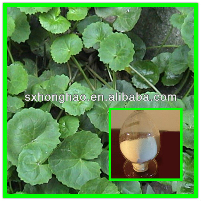 100% Nature Total Triterpenes 80% Gotu Kola P.E.
