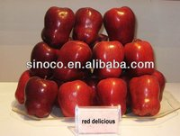 apple fruits, apple fruits red delicious