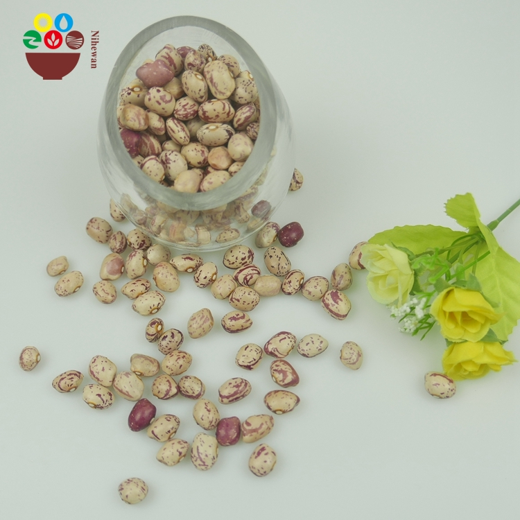 Factory supply new round light speckled kidney bean,pinto beans