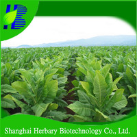 High sprouting rate tobacco seeds for sale