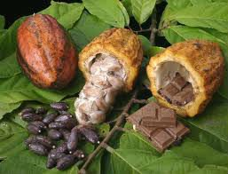 Cacao, Coffee, rubber tree, cashew nut, palm tree