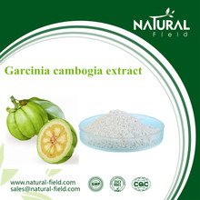 Slimming product Garcinia Cambogia Extract Powder