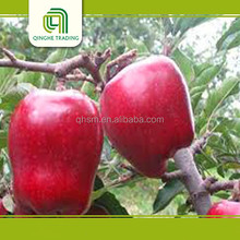 Fresh Huaniu apples fruit specification