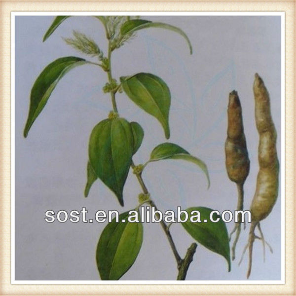 chinese plant pure natural Radix Linderae extract