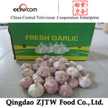 China natural garlic wholesale