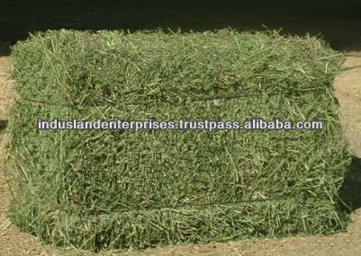 Alfalfa Hay - Single Press