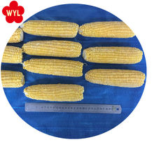 Best price Wholesale Bulk IQF Frozen Sweet corn on the cob