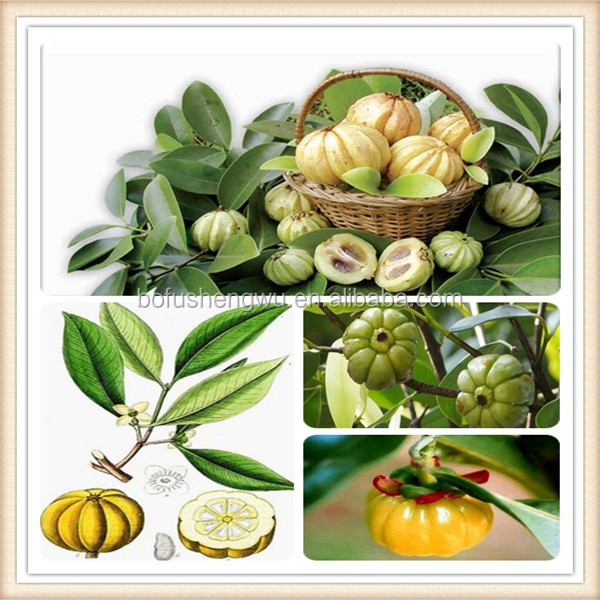 garcinia cambogia extract side effects/garcinia cambogia fruit extract/wholesale garcinia cambogia extract