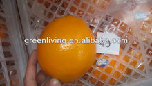 China direct navel orange factory with competitive price