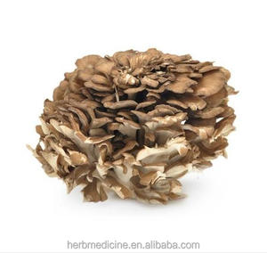 Natural dried Maitake anti cancer Grifola frondosa wild fungus for edible food