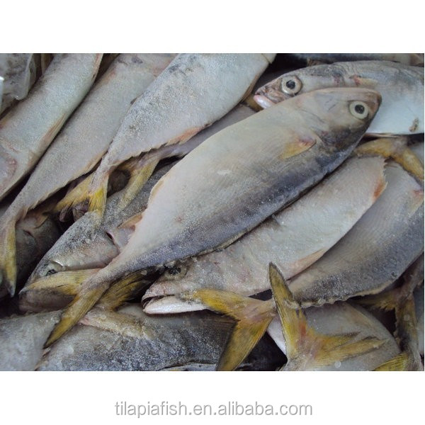 wholesale good Indian mackerel fish supply