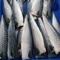 Frozen Seafood Of Atlantic Mackerel Scomber