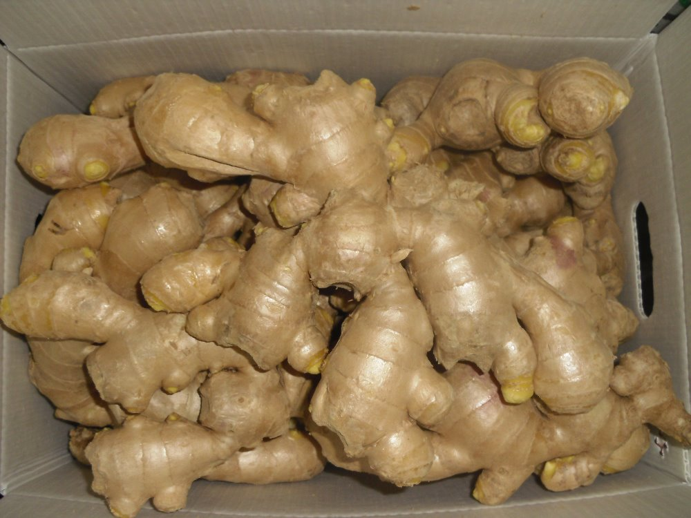 2017 Yellow Ginger Air Dry Ginger In China