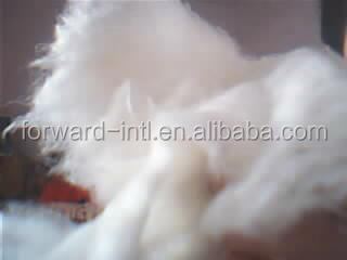 Cheap price Inner mongolian origin raw cashmere wool
