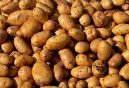 Holland Potatoes for Africa
