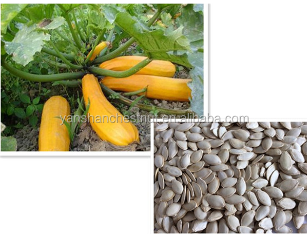 Export Good Quality Fresh Chinese White Pumpkin Seeds