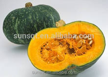 Supply 100% Natural and Pure Dehydrated Vegetable Powder Pumpkin Powder