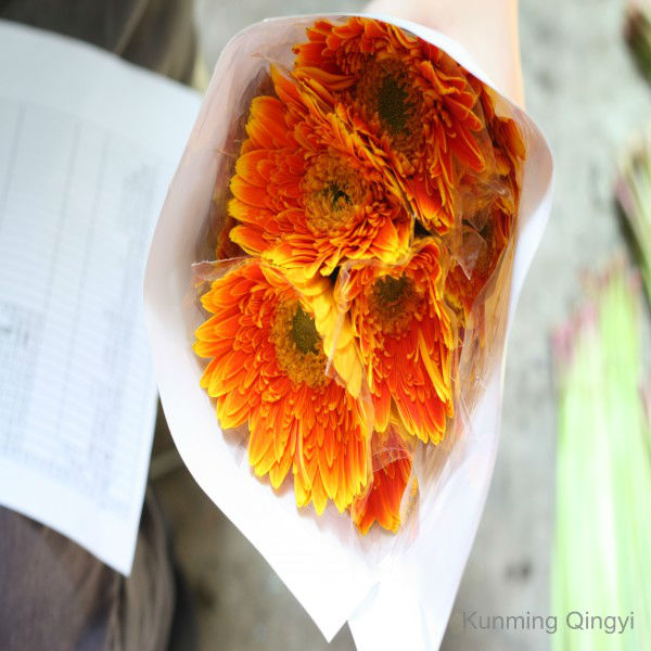 High quality long time flower orange gerbera made in China export wholesale