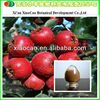 Supplier of Hawthorn Fruit P.E. with Flavone 90%/Hawthorn Extract 3% Vitexin