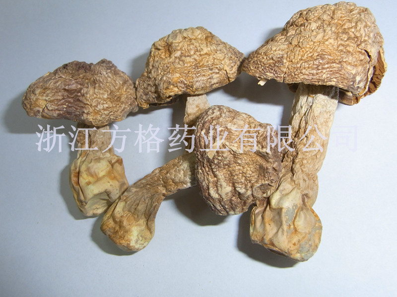 Agaricus Blazei Extract20%-40%, Edible and Medicinal Mushroom, No. 1 Ecological Supplement; Health Care Supplement;
