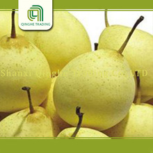 2015 new crop ya pear hot sale in middle east fresh fruit