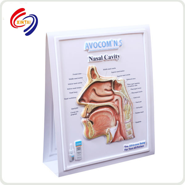 2018 Medical Educational pvc 3D wall anatomy poster
