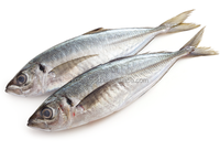 Frozen Horse Mackerel IQF