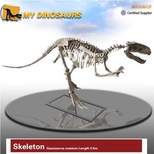 dinosaur skeleton model for museum