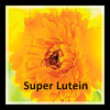 Yellow Dye Lutein Marigold Extract for Chicken Feed