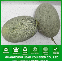 NSM07 Huishen Guangzhou chinese vegetable seeds for open field sweet melon