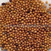 Bai jie zi Mustard Seed natural homeopathic remedies