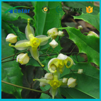 epimedium sagittatum extract benefits