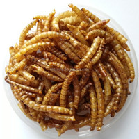 Top quality dried mealworm for KOI TASTIC / koi and pond fish treat