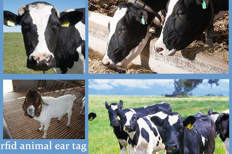 Cattle Cows Animal Identification One-Piece Ear Tag