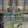 Factory wholesale big dog kennes/Alibaba China high quality cheap galvanized chain link dog kennels for sale