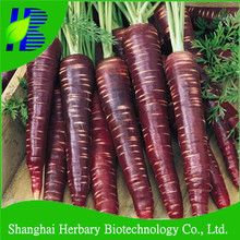 2016 Hot sale deep purple carrot seeds for sowing