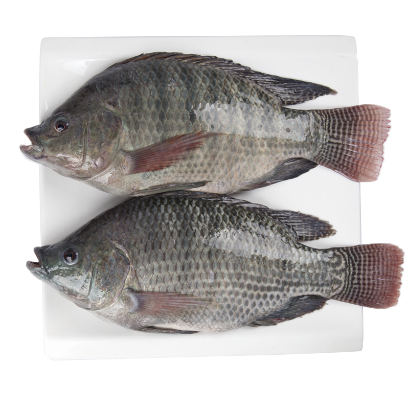 Seafood wholesale top quality fresh <strong>fish</strong> frozen whole tilapia