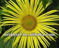 High quality Inula racemosa P.E. 10:1