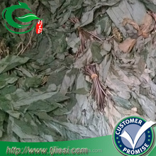 supply 2016 china dried in sun ginseng leaves with low price