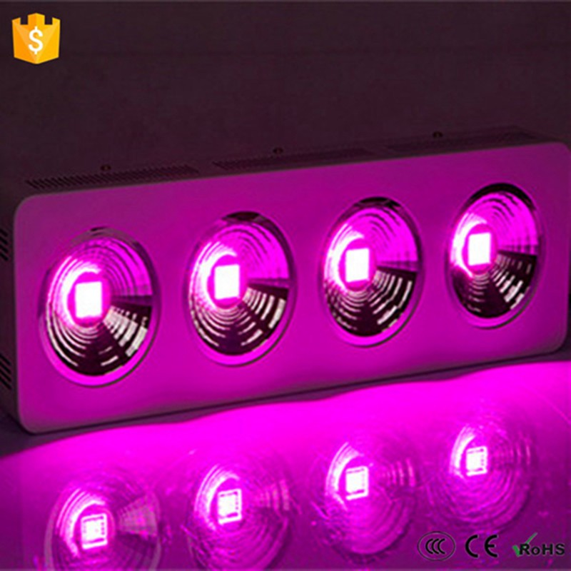 3 years warranty high lumn high yield COB chip LED 800w apollo-4 full spectrum grow lights