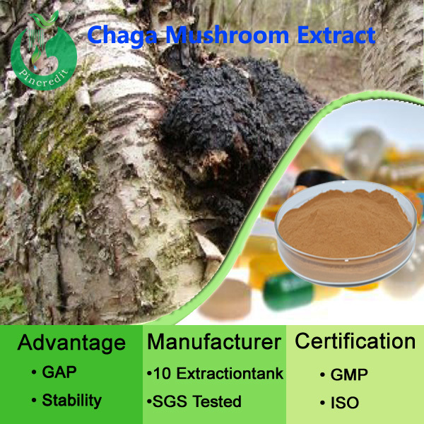 Top quality Chaga P.E/chaga tea/chaga coffee supplier