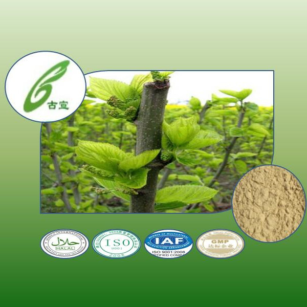 natural herb Mulberry bark extract