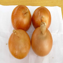 Newest crop yellow onion wholesale