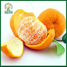New crop mandarin fresh fruits oranges with high quality