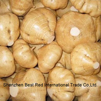 Fresh yam bean/Jicama with good quality
