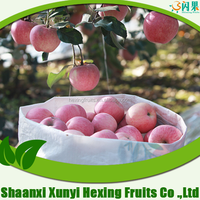 2015 bulk fresh fuji apple fruit for export