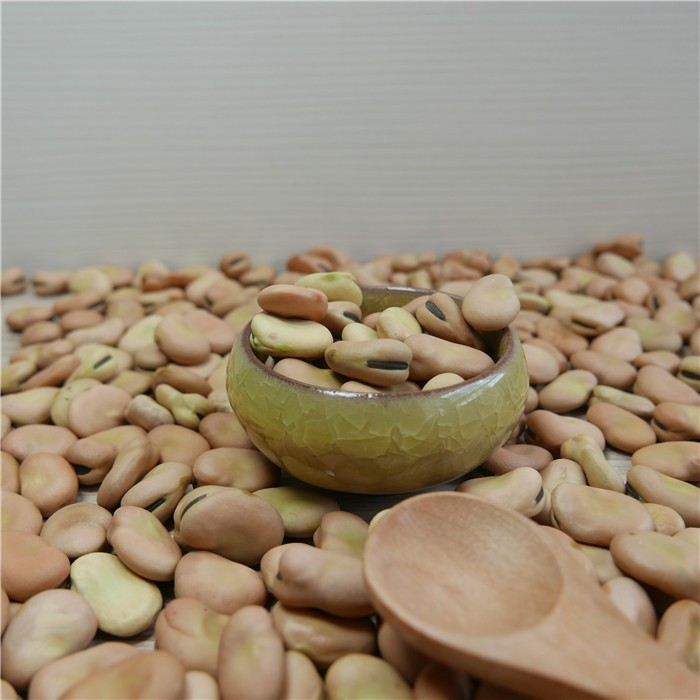 Dried yellow Fava/ Faba Beans/ Broad Beans seller 40-50