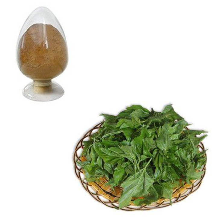 Hot Sales Organic White Mulberry Leaf Tea Extract with High Quality
