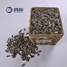 high quality chinese cheap 5009 sunflower seeds