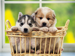 two little dog in basket 3d plastic animal wall decoration